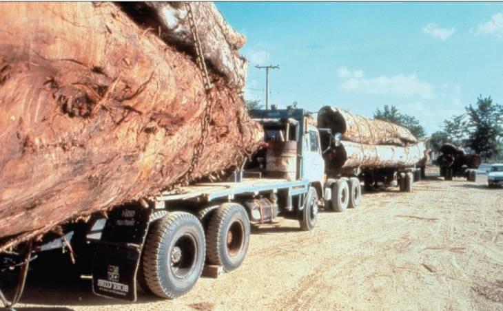 CPI : les ravages écologiques comme crimes l'humanité